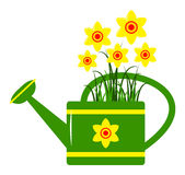 Watering can and daffodils Royalty Free Stock Photography