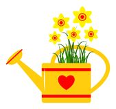 Watering can and daffodils Stock Photos