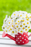 Watering can with daisies Royalty Free Stock Image