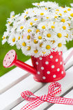 Watering can with daisies Royalty Free Stock Photography