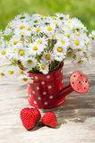 Watering can with daisies Royalty Free Stock Photos