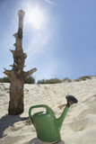 Watering Can By Dead Tree On Beach Stock Image
