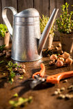 Watering can and different herbs Royalty Free Stock Photography
