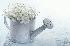 Watering can filled with white flowers Stock Photos