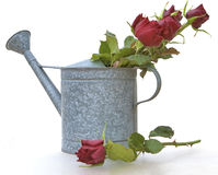 Watering can with flowers. Metal watering can with beautiful flowers inside Royalty Free Stock Image