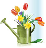 Watering can and flowers. Royalty Free Stock Photography