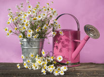 Watering can for flowers Stock Photo