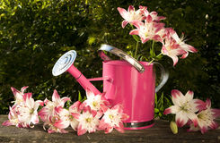 Watering can for flowers Royalty Free Stock Image
