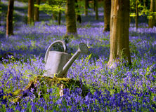 Watering can between flowers. Watering can found in the forest betwween green trees and blue flowers Royalty Free Stock Photos
