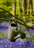 Watering can between flowers. Watering can found in the forest betwween green trees and blue flowers Stock Image