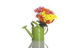 Watering can with flowers Royalty Free Stock Image
