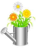 Watering can and flowers. Royalty Free Stock Image