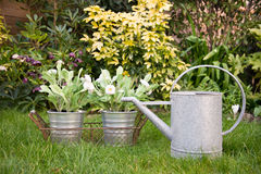Watering can and flowers Royalty Free Stock Image
