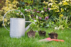 Watering can and flowers Royalty Free Stock Images
