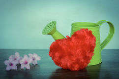 Watering can with flowers and red heart Royalty Free Stock Photo
