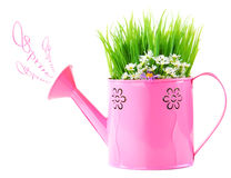 Watering can of fresh spring wild flowers Royalty Free Stock Image