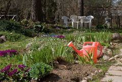 Watering can in the garden. Red watering can in the garden in spring Stock Photos