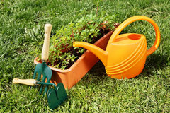 Watering can with gardening tools on the grass Royalty Free Stock Photo