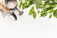 Watering can with gardening tools and green bunch of twigs and leaves on white desk background. Top view, border stock photo