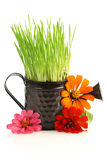 Watering can with grass & flowers Royalty Free Stock Photos