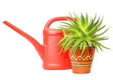 Watering can and green plant. Red plastic watering can and green plant Stock Photos