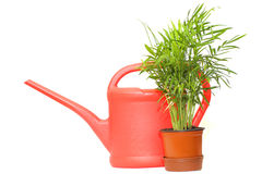 Watering can and green plant. Red plastic watering can and green plant Stock Photography