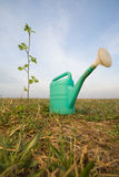 Watering can and growing plant Stock Image