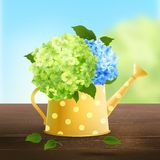 Watering Can With Hydrangea Royalty Free Stock Images