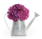 Watering can with hydrangea Stock Photography