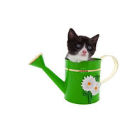 Watering Can Kitty Royalty Free Stock Photos
