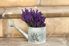 Watering Can and Lavender Stock Photos