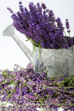 Watering Can and Lavender Royalty Free Stock Photography