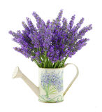 Watering can with lavender Royalty Free Stock Image