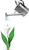 Watering can and lily of the valley Royalty Free Stock Image