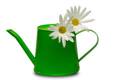 Watering can with marguerites Royalty Free Stock Photography