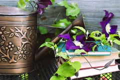 Watering can and old books. With a clematis vine Stock Images