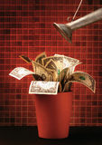 A watering can over a pot of dollar bills Stock Image