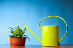 Watering can and plant Royalty Free Stock Images