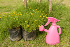 Watering can and plant in flower bag. In the park royalty free stock image