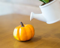 Watering can and plant over with plumkin. On wooden table stock images