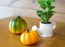 Watering can and plant over with plumkin. On wooden table stock photos