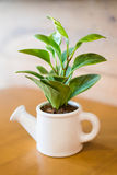 Watering can and plant over. Wooden table stock image