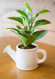 Watering can and plant over. Wooden table royalty free stock images
