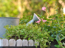 Watering can in plants Stock Images