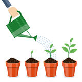 Watering can and plants in pots. Royalty Free Stock Photos