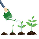 Watering can and plants. Stock Images
