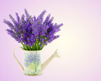 Watering can with plucket lavender Royalty Free Stock Photos