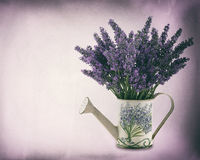 Watering can with plucket lavender Stock Photos