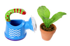 Watering Can and Pot Plant Royalty Free Stock Images