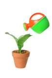 Watering Can and Pot Plant Stock Photos